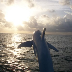 On board the Dolphin Encounter boat