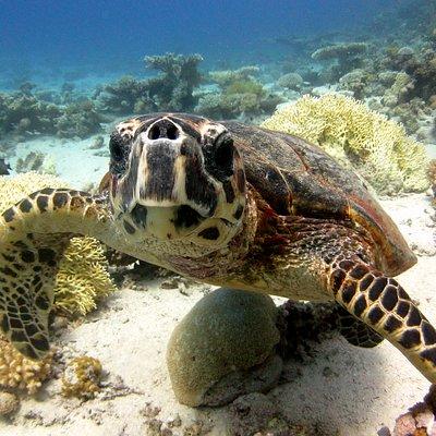 Turtle..
