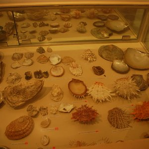 Exhibits in eye of the lens