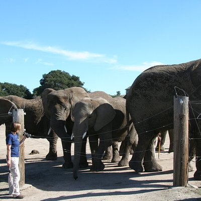 Elephants during the Pachyderm Tour