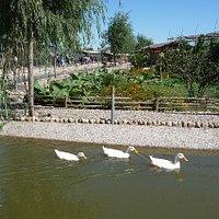 Farmyard zoo area