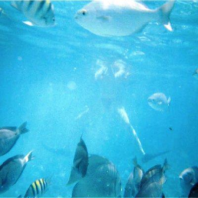 Snorkel en el Farito. Isla Mujeres