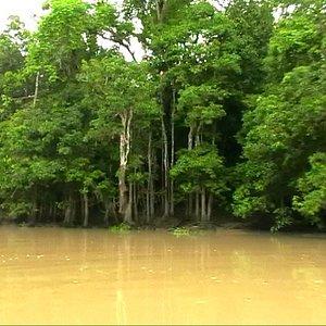 lehmgelbes Flusswasser