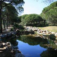 Praia Verde forest walk