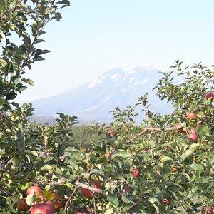 リンゴ公園からの岩木山