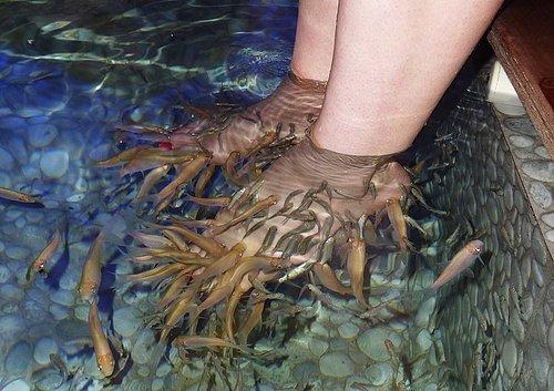feet for dinner!