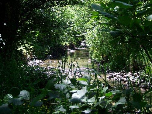 little stream in the picnic area