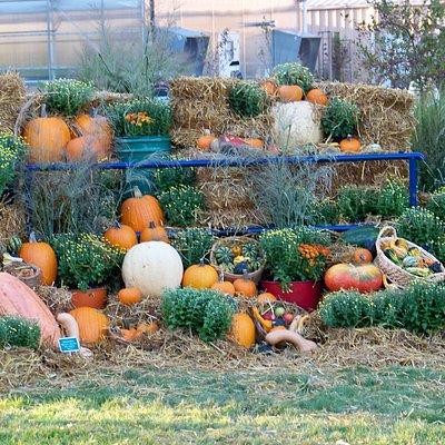 Fall Festival Pumpkin Display