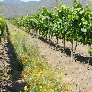 Emiliana Winery - Casablanca Valley - Private Tastingi