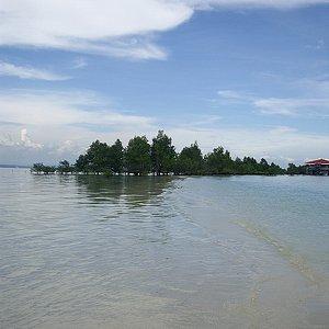 海の真ん中にマングローブが・・・