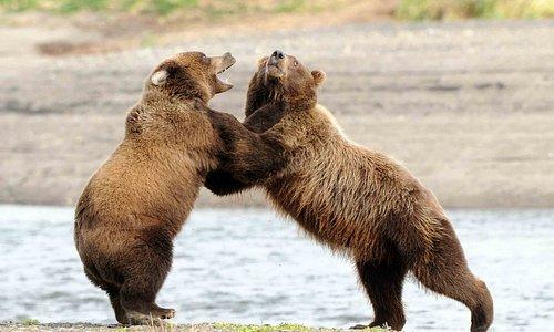 Cubs at play!