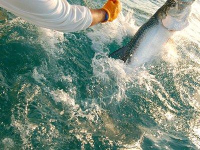 Islamorada Tarpon fishing at its best!