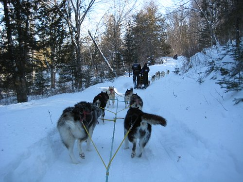 Dog Sledding 1 (Feb. 2011)