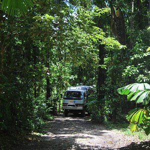 Getting off the beaten track in the Daintree rainforest