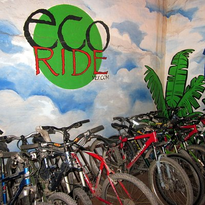 Great selection of well-maintained bikes!
