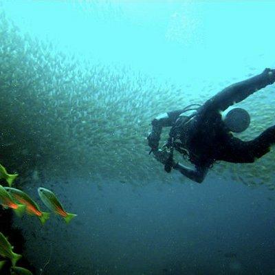 Koh Phangans erstes PADI 5 Sterne IDC Dive Resort. Geboten werden alle Tauchkurse vom Anfaenger