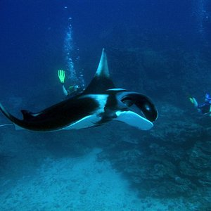Lucky lucky, Manta ray on dive. WOW