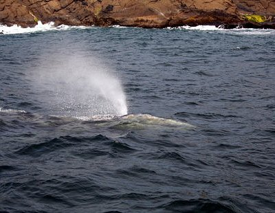 another whale spray (Tradewinds Charters)
