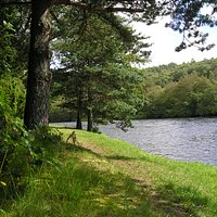 Anagach Woods at the Spey