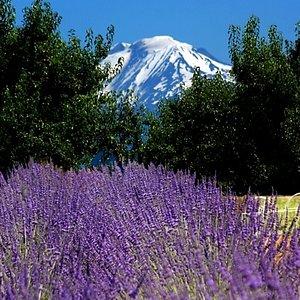 Mt Adams & Mt Hood views