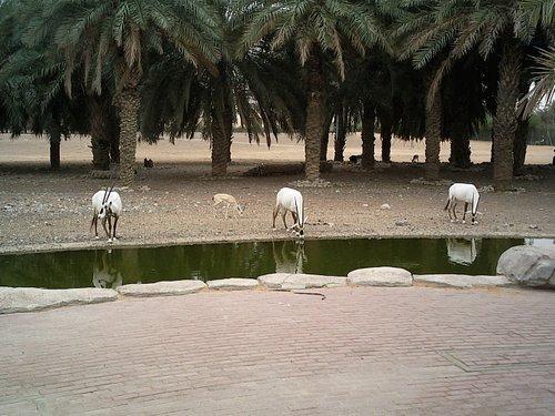 Arabian Wildlife Centre à Sharjah