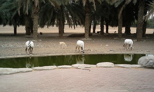 Arabian Wildlife Centre à Sharjah