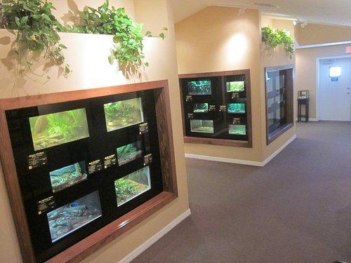 Snake exhibition area