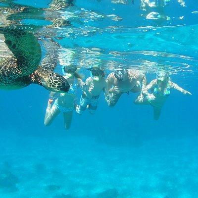 Turtle Snorkel Tours