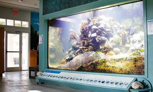 Atlantic Coral Reef Ecosystem. Photo courtesy of Eric J. Hessler.