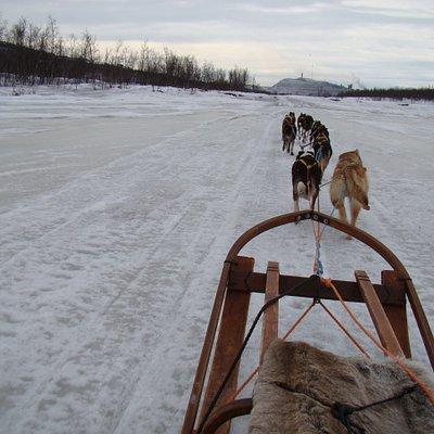Sleddog in Kiruna