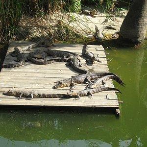 Additional Gators