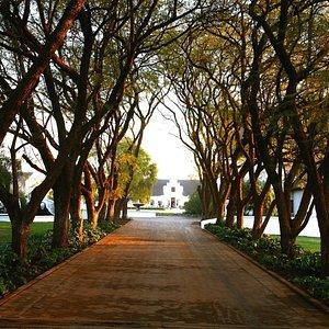 Kievits Kroon Jacaranda Lane
