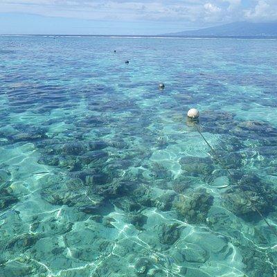 Beautiful coral garden