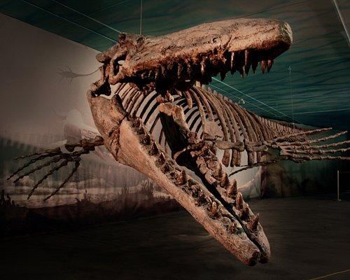 "Meet ""Bruce"" - Canada's largest Mosasaur!!"