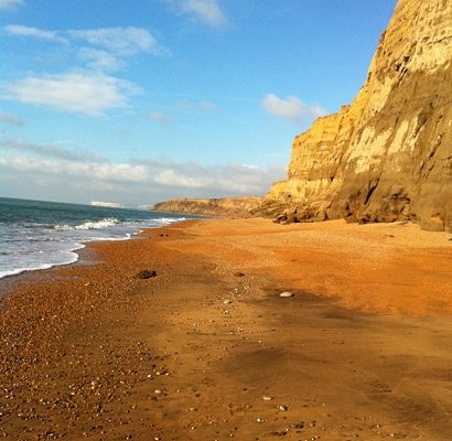 a beach full of fossils!