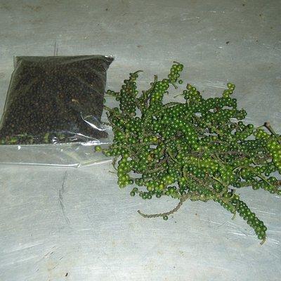Pepper fromRanweli Spice Garden