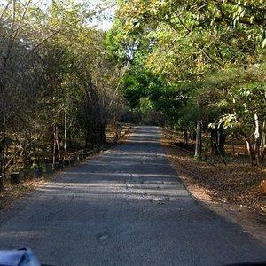 The approach road to Bondla wildlife sanctuary
