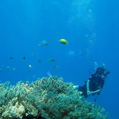 Dive in Pemuteran