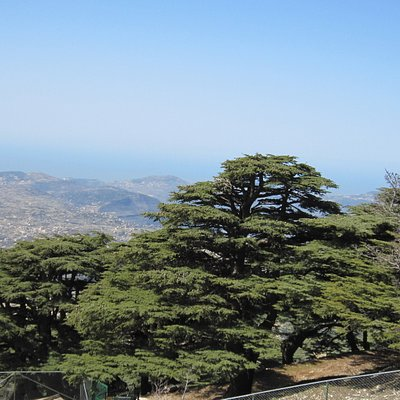 Cedars (more that 3000 years old trees)