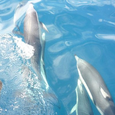 Wild dolphins so close they sometimes touch you