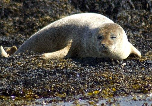 seals at kenmore