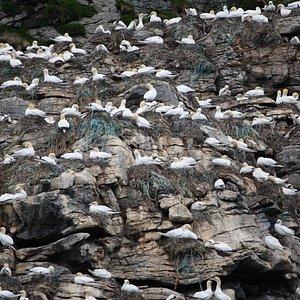 le colonie di uccelli
