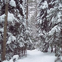 Hardwood Ridge Trail at Wiessner Woods