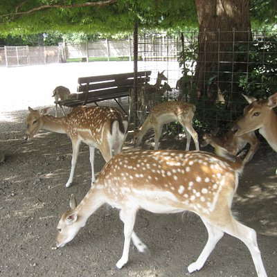 Some of the deer