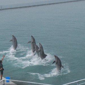 Dolphins doing their farewell stint.