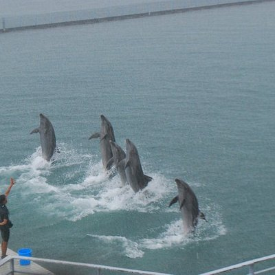 Dolphins doing their farewell stint.