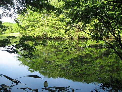 錦小沼の水面に映る緑