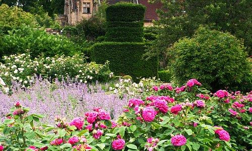 Rose garden in June