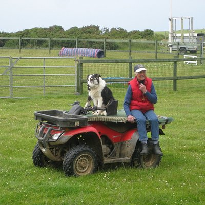 Dog driving the quad bike.