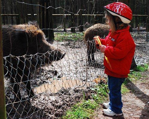 Wildschweingehege im Fürther Stadtwald